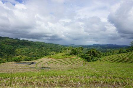Candijay Rice paddies